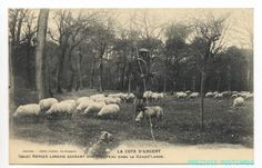 Landais SHEPHERD ON STILTS & Sheep COTE D'ARGENT FRANCE