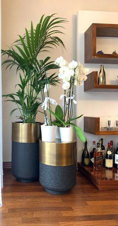 Potted Plants, Indoor Plants, Side Table Height, Metal Barrel, Plastic Flower Pots, Brass Side Table, Dark Wood Floors, Luxury Flowers, Metal Planters