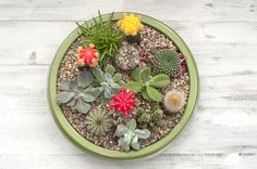 Succulents are sturdy, low-maintenance plants that are ideal for growing in containers. Learn the basics of successful succulent container gardening. Best Soil For Succulents, Growing Succulents, Succulents In Containers, Cacti And Succulents, Container Plants, Planting Succulents, Container Gardening, Gardening Tips, Organic Gardening