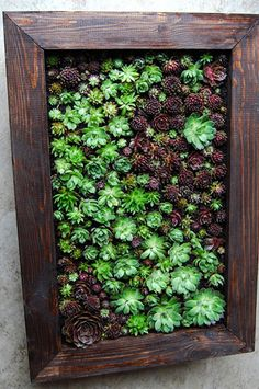 Succulent wall hanging...
