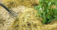 Таблица свойств мульчи для каждого растения | Садок-городок | Яндекс Дзен