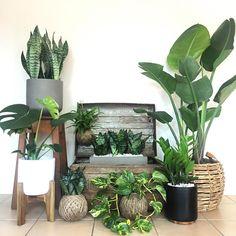 #plantgang @urbanleafco