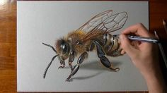 Bee Realistic Colored Pencil Drawings by Marcello Barenghi 3d Drawings, Realistic Drawings, Honey Bee Drawing, Honey Bee Tattoo, Bee Art, Insect Art, Coloured Pencils, Colored Pencil Drawings, Color Pencil Art