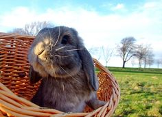 Peter Rabbit knows what's up... Rabbit Food! https://www.kickstarter.com/projects/sterlingwoodard/rabbit-food-bike #rabbitfood #vegan #GreenvilleSC #plantbased