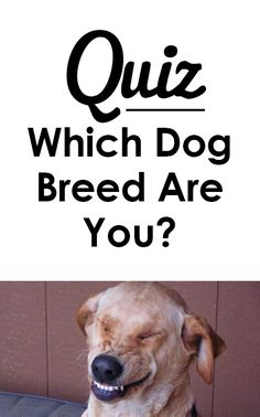 Quiz: Which dog breed are you?   I got golden retriever!  http://iheartdogs.com/quiz-which-dog-breed-are-you/