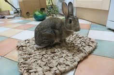 How to weave a paper mat for your rabbit!