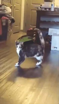 Funny Animal Videos, Funny Animal Pictures, Cute Funny Animals, Cute Baby Animals, Animals And Pets, Cute Cats, Funny Cats, Cats Are Assholes, Funny Photoshop Pictures