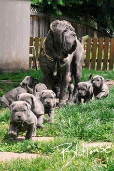 Ces 13 chiennes accompagnées de leurs petits vont vous faire craquer !