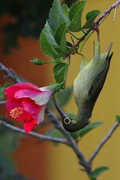 Birds and Nature Photography in Raub, Malaysia Bird, Backyard birding, Gambar Burung Pretty Birds, Beautiful Birds, Beautiful World, Animals Beautiful, Cute Animals, Exotic Birds, Colorful Birds, All Birds, Love Birds
