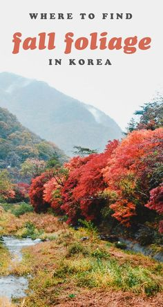 Wondering where the BEST places to see fall foliage in South Korea are? Look no further than this extensive list. Don't miss autumn travel in this country! #thingstodoinkorea #koreatravel