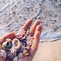 Treasures in the ocean summer beach, beach day, summer fun, ocean beach, Beach Aesthetic, Summer Aesthetic, Flower Aesthetic, Blue Aesthetic, Aesthetic Fashion, Beach Day, Summer Beach, Ocean Beach, Ocean Waves