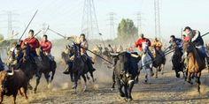 """We want Tordesillas to stop the selective annihilation of the """"La Vega's Bull"""" https://secure.avaaz.org/en/petition/Declarar_a_Tordesillas_un_lugar_perfido_para_la_humanidad_y_fatidico_para_los_animales_indefensos/?pv=15"""