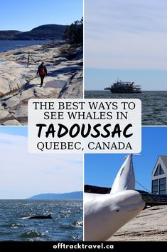 Whale watching in Tadoussac is both incredibly varied and exceptionally easy. We found four fun ways to go whale watching in Tadoussac on our recent visit Saguenay Quebec, Places To Travel, Places To See, East Coast Road Trip, Canadian Travel, Visit Canada, Quebec City, Boat Tours, Whale Watching