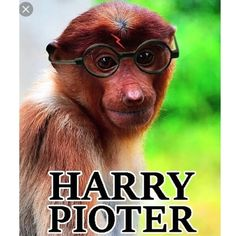 wszystkie memy z neta :v # Humor # amreading # books # wattpad Super Funny Memes, Harry Potter Memes, Haha, Marvel, Cool Stuff, Books, Pictures, Dream Wall, Animals