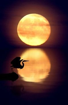 Full Moon #reflection #bird