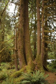 Hall of Mosses Trail - Want to be able to indentify plants with your mobile phone? Check out GardenAnswers.com!