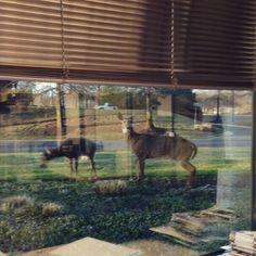 Looks like we've got some office visitors | Photo courtesy of our Sales Manager, Darin B. #DeskView #Spring #NoVA