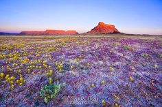 Guy Tal, a Utah-based landscape photographer, writer, has recently presently a series of delicate beauty that is found in the badlands. Desert Flowers, Colorful Flowers, Wild Flowers, Rock Flowers, Colorful Garden, Desert Photography, Landscape Photography, Stunning Photography, Image F
