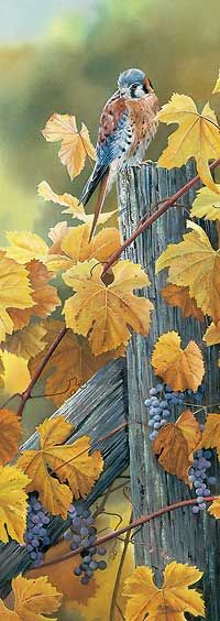 Harvest Gold-Kestrel by Susan Bourdet : Wild Wings Fall Harvest, Harvest Time, Wildlife Art, Bird Art, Bird Feathers, Beautiful Birds, Pet Birds, Autumn Leaves, Images