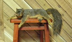 That's an awfully seductive pose for a squirrel...