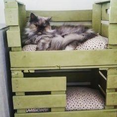 Litera para gatit@s hechas con cajas de fruta y cojines diy!