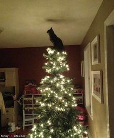 this cat has confidence!