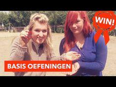 Beginnen met vrijheidsdressuur   PaardenpraatTV - YouTube