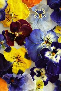 Real dried violas to use in the craft project you've been dreaming up! Glue onto a canvas for custom artwork, seal in a resin craft, use in a centerpiece, the options are endless. Black Centerpieces, Wedding Table Centerpieces, Christmas Centerpieces, Mason Jar Gifts, Mason Jar Diy, Faux Flowers, Dried Flowers, Diy Anniversary Gifts For Him, Natural Crafts