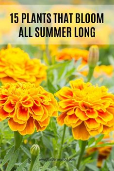 You have a wide selection of summer bloomers to choose from. Gardening 15 Plants That Bloom All Summer Long Outdoor Plants, Garden Plants, Outdoor Gardens, Summer Plants, Summer Flowers, Red Flowers, Flowers Perennials, Planting Flowers, Flower Gardening