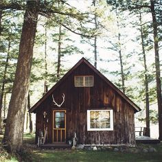bright, antlers, windows // cabin + trees