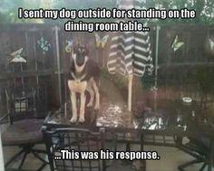 Dog loves the table haha