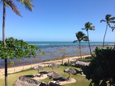 Praia do Forte- Bahia