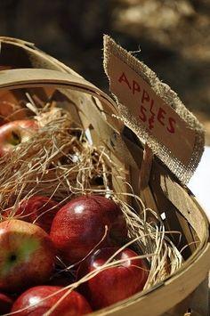 Autumn basket of apples