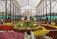 """""""200th flower show at Lalbagh this August"""" Wat's happening around u get complete information at GISMaark Mirror its ur voice. visit to read and comment http://www.gismaark.com/MirrorView.aspx"""