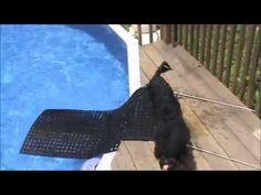 DIY Dog Ramp for Swimming Pool - YouTube