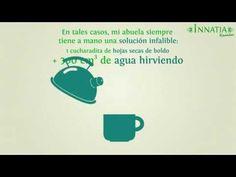 Te de boldo para adelgazar y para depurar el higado, propiedades y contra-indicaciones del te de boldo