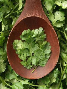 The leaves of this plant are often referred to as cilantro, but the seeds are most commonly called coriander. And if you're looking to spice up a ceviche or add a citrusy tang to soup, throw in some cilantro.
