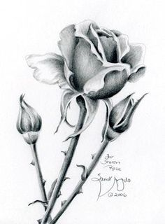 Trendy Flowers Drawing Step By Step Art Lessons Pencil Drawings Of Flowers, Pencil Drawing Tutorials, Flower Sketches, Art Drawings Sketches, Cool Drawings, Flower Sketch Pencil, Pencil Sketching, Flower Drawing Images, Pencil Drawing Images