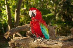 parrot-1414018_1920