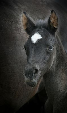 Horse Heaven THE VERY NATURE OF BLACK