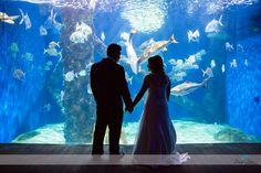 Virginia Aquarium Wedding | Couple's Portraits | Bride and Groom | Aquarium Tank | Daissy Torres Photography
