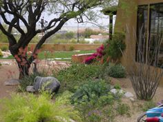 1000 images about desert scapes on pinterest desert for Landscaping rocks tucson