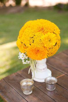 Fall flower - teddy bear sunflowers