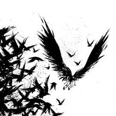 crows black wings flap picture and wallpaper