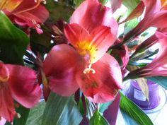 "Beginning gardener harvests ""seeds"" from lily bouquet. Well, ok. Not seeds."