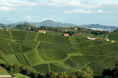 White Wine, Red Wine, Pinot Noir, Homeland, Austria, Wines, Vineyard, Country, Outdoor