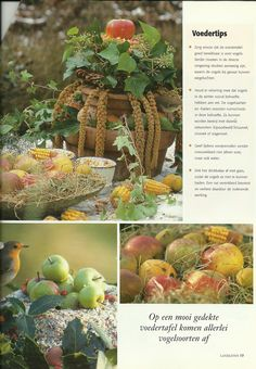 Vogelvoer Country Farm, Country Living, Farm Life, Countryside, Birds, Winter, Garden, Outdoor Decor, Robin