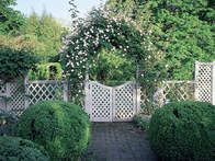 Climbing roses need a little different care from other types of rosebushes. Follow these steps from HGTV Gardens to create a beautiful display in your garden.