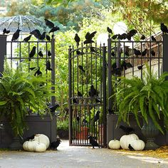 CASA TRÈS CHIC - crows at a garden gate with white pumpkins