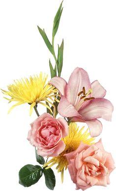 Botanical Flowers, Botanical Art, Flower Prints, Flower Art, Early Spring Flowers, Flower Garden Plans, Victorian Flowers, Bunch Of Flowers, Botanical Drawings